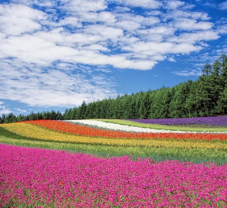 flower-garden
