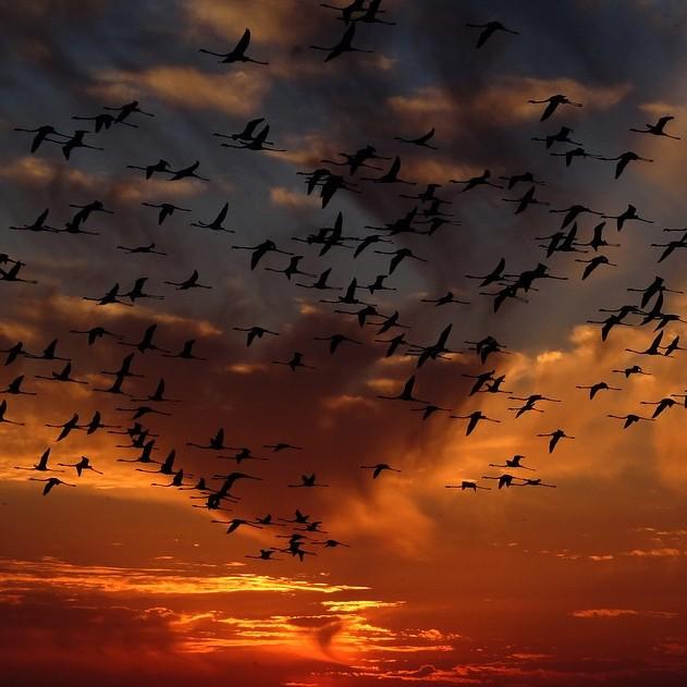 Birds V2